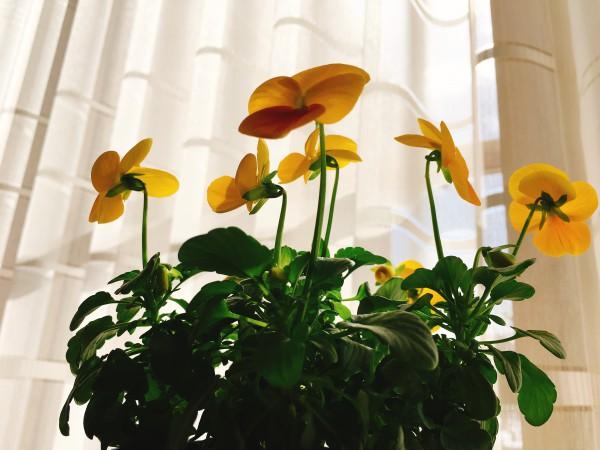立春の薬膳